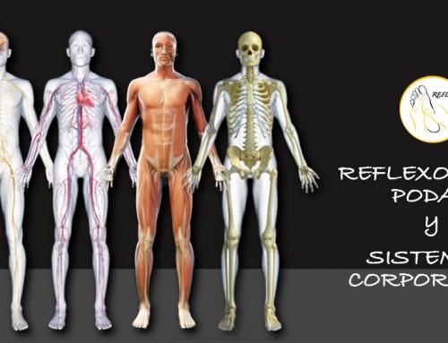 La Reflexología Podal y los Sistemas Corporales